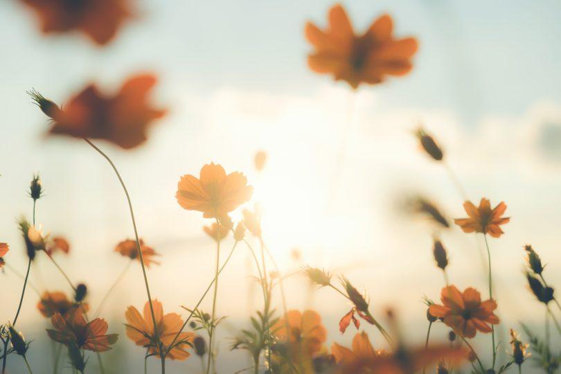 poesia-florescer